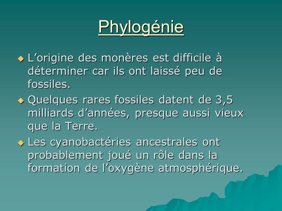 Phylogénie  L'origine des monères est difficile à déterminer car ils ont laissé peu de fossiles.  Quelques rares fossiles datent de 3,5 milliards d'