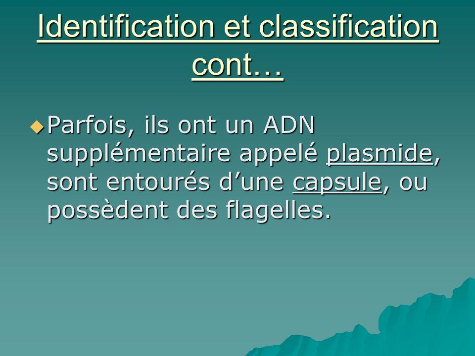 Identification et classification cont…  Parfois, ils ont un ADN supplémentaire appelé plasmide, sont entourés d'une capsule, ou possèdent des flagell