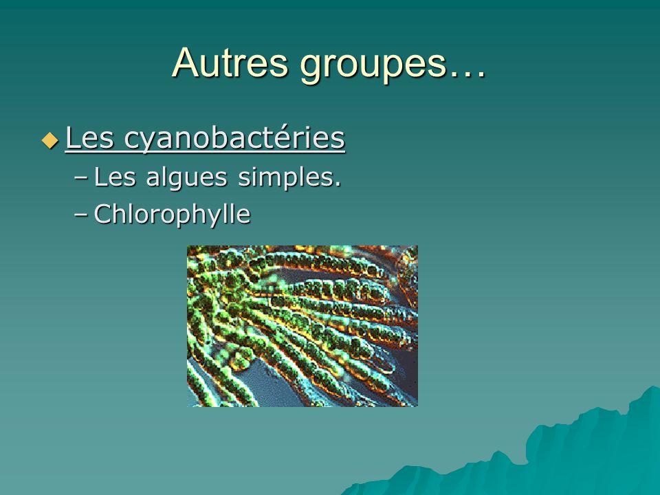 Autres groupes…  Les cyanobactéries –Les algues simples. –Chlorophylle