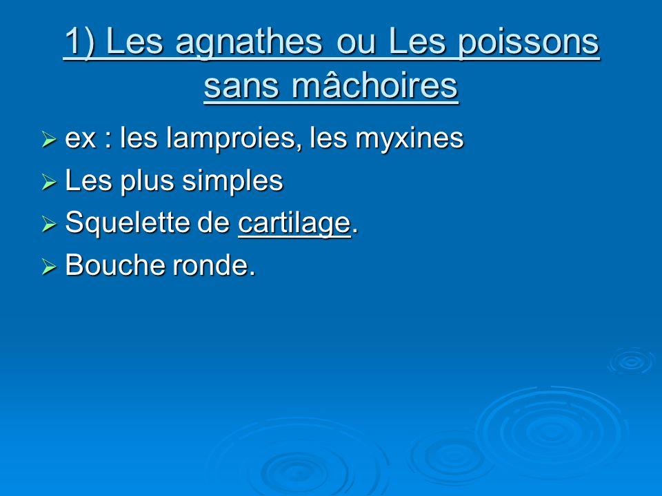 1) Les agnathes ou Les poissons sans mâchoires  ex : les lamproies, les myxines  Les plus simples  Squelette de cartilage.