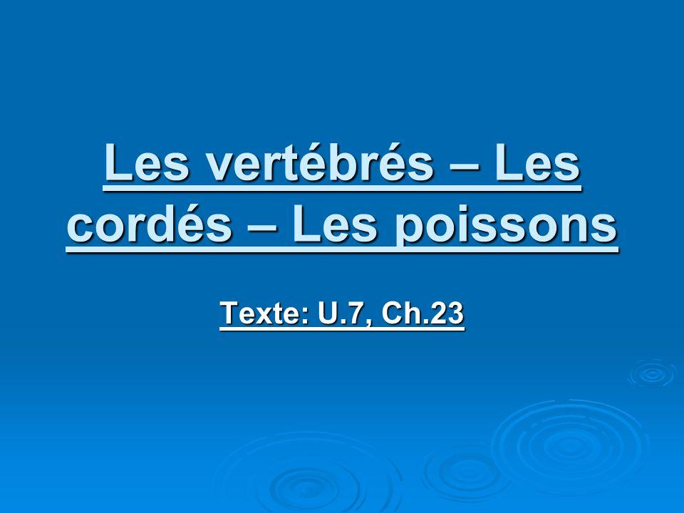 Les vertébrés – Les cordés – Les poissons Texte: U.7, Ch.23
