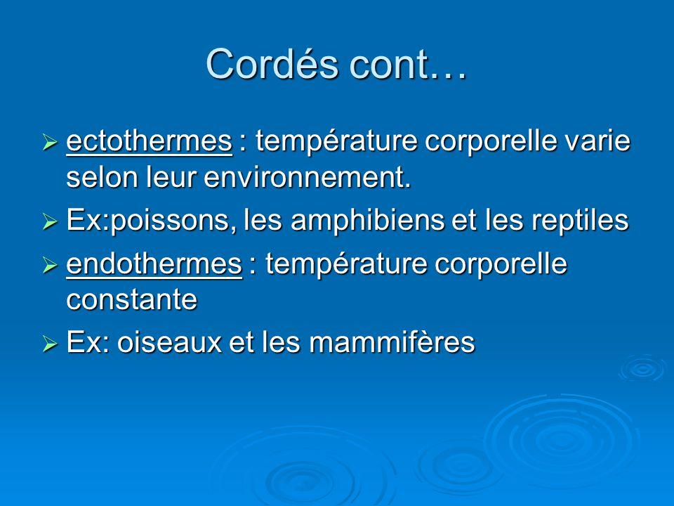 Cordés cont…  ectothermes : température corporelle varie selon leur environnement.