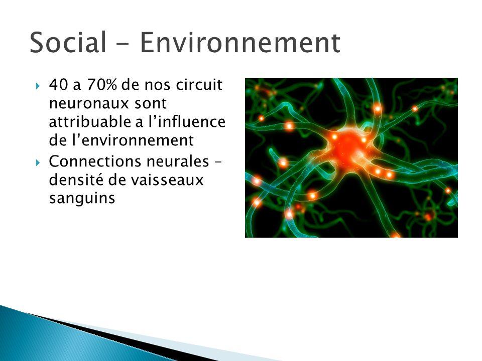  40 a 70% de nos circuit neuronaux sont attribuable a l'influence de l'environnement  Connections neurales – densité de vaisseaux sanguins