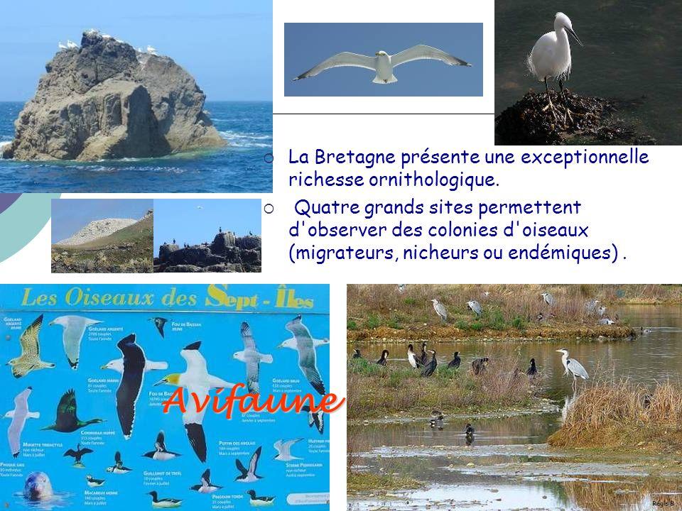 Avifaune  La Bretagne présente une exceptionnelle richesse ornithologique.  Quatre grands sites permettent d'observer des colonies d'oiseaux (migrat
