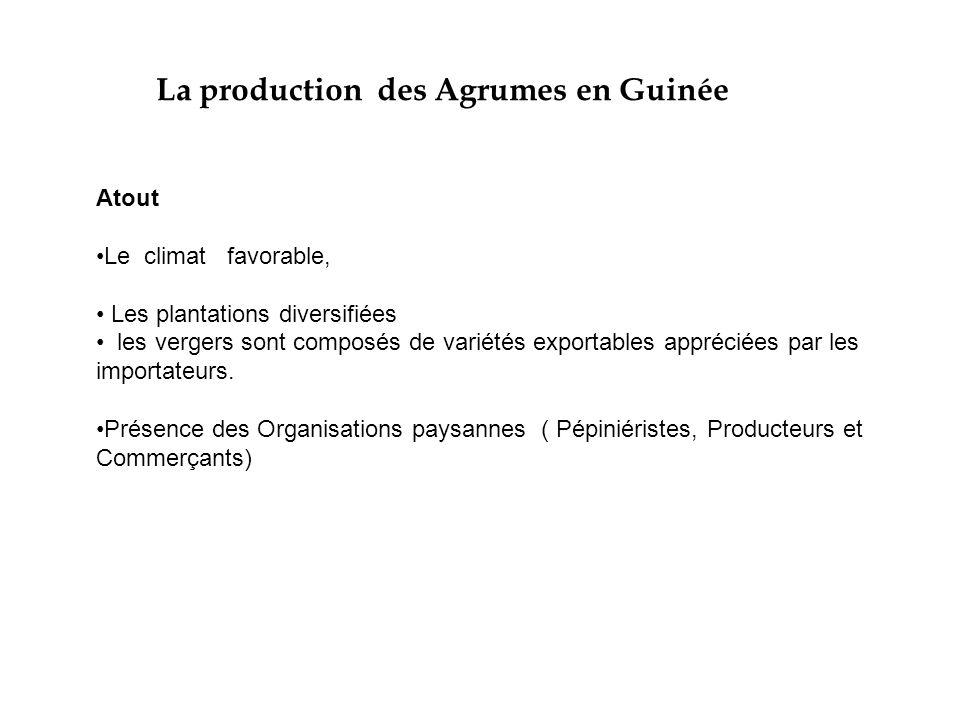 La production des Agrumes en Guinée Atout Le climat favorable, Les plantations diversifiées les vergers sont composés de variétés exportables apprécié