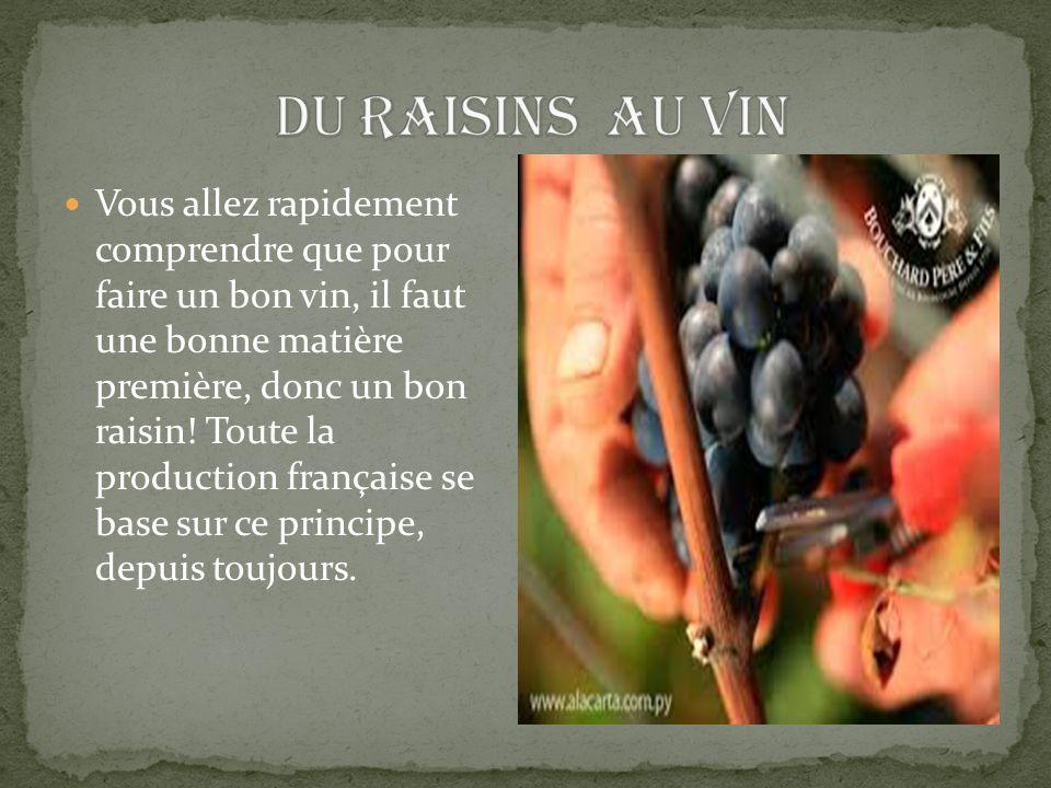 Vous allez rapidement comprendre que pour faire un bon vin, il faut une bonne matière première, donc un bon raisin! Toute la production française se b