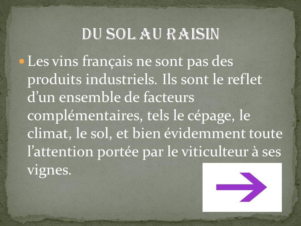 Les vins français ne sont pas des produits industriels. Ils sont le reflet d'un ensemble de facteurs complémentaires, tels le cépage, le climat, le so