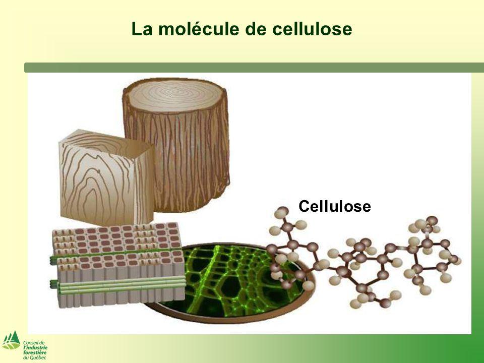 La molécule de cellulose Cellulose