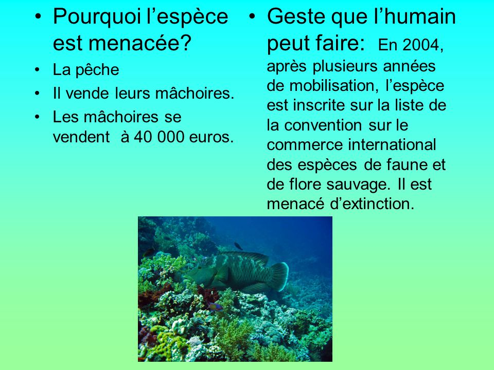 Pourquoi l'espèce est menacée? La pêche Il vende leurs mâchoires. Les mâchoires se vendent à 40 000 euros. Geste que l'humain peut faire: En 2004, apr