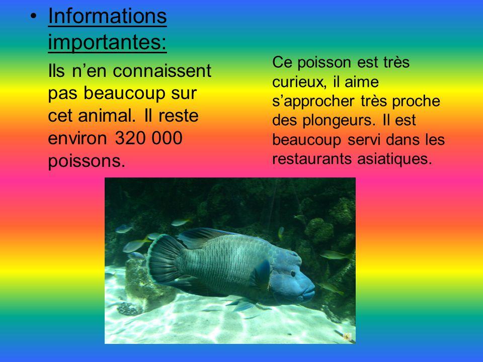 Informations importantes: Ils n'en connaissent pas beaucoup sur cet animal. Il reste environ 320 000 poissons. Ce poisson est très curieux, il aime s'