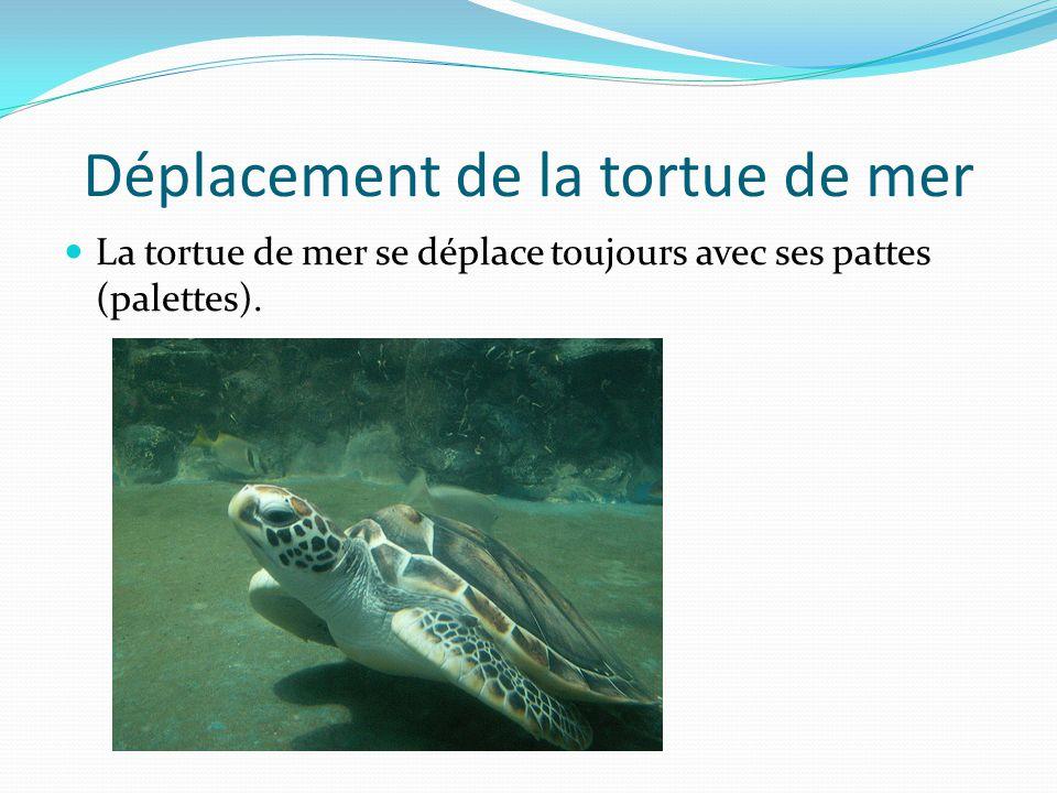 Déplacement de la tortue de mer La tortue de mer se déplace toujours avec ses pattes (palettes).