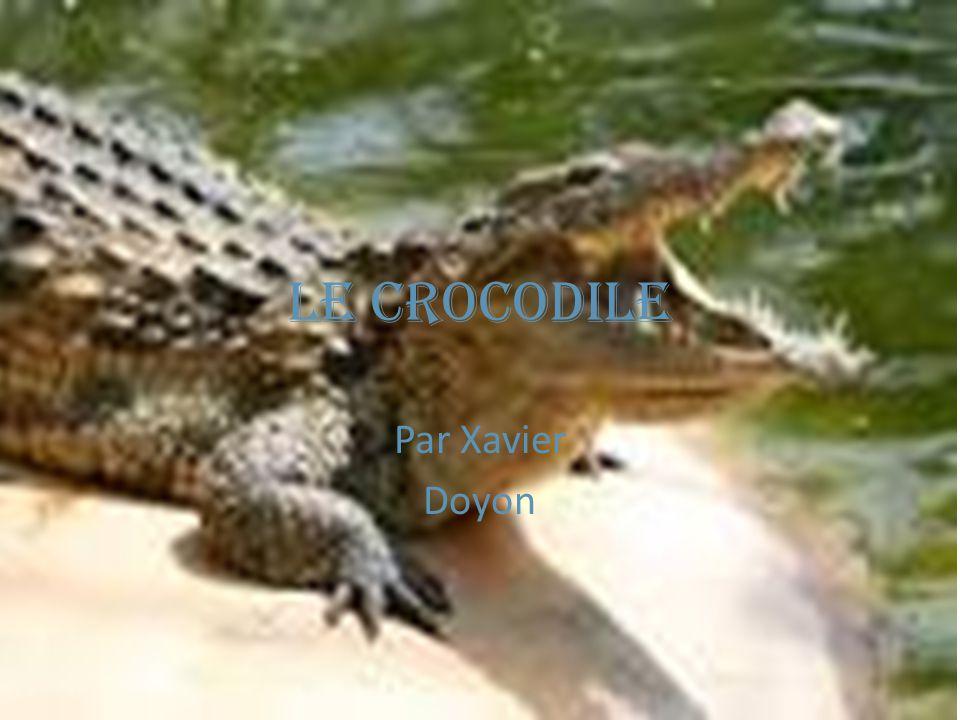Le crocodile Par Xavier Doyon