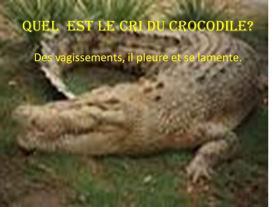 Quel est le cri du crocodile? Des vagissements, il pleure et se lamente.