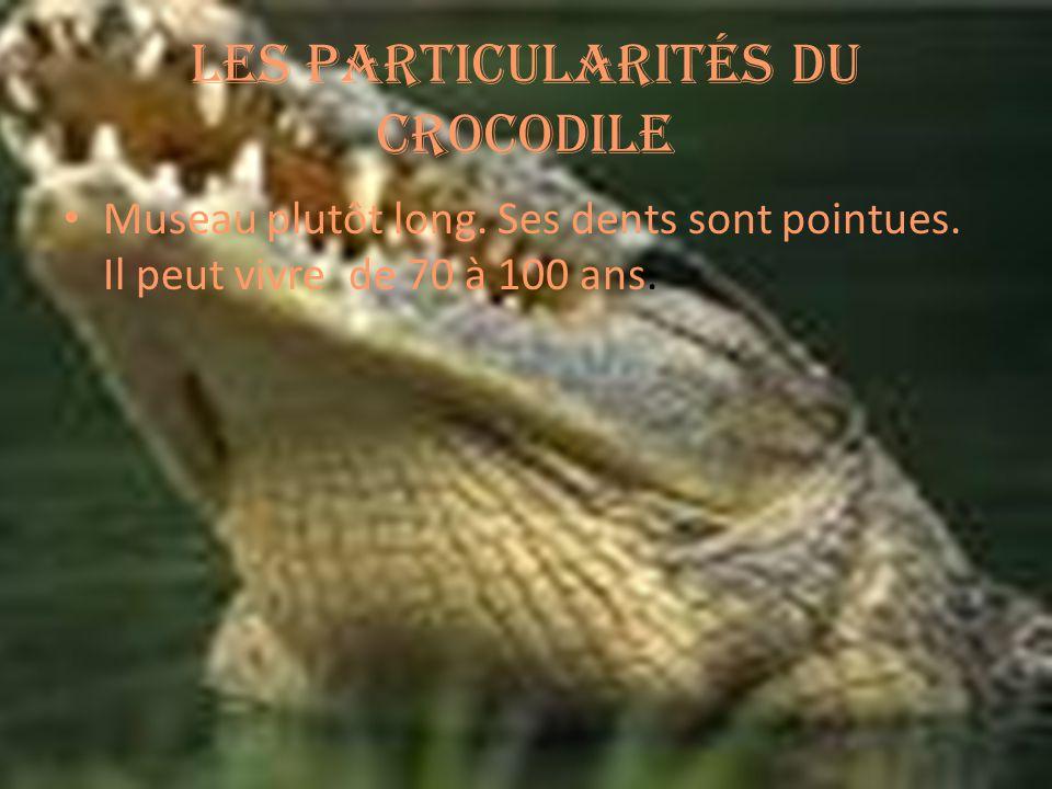 Les particularités du crocodile Museau plutôt long.