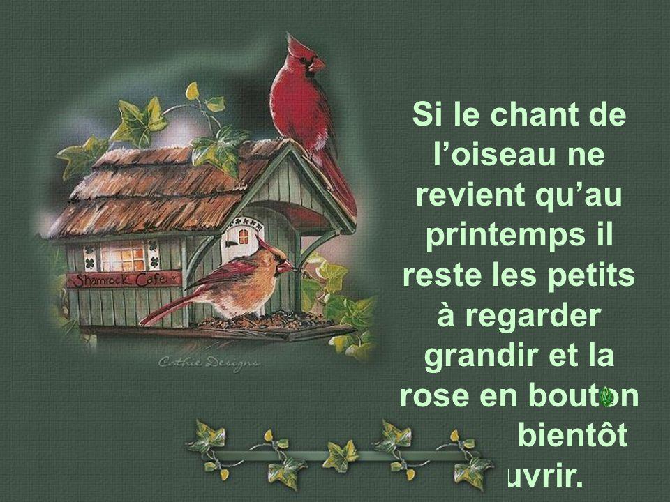 Si le chant de l'oiseau ne revient qu'au printemps il reste les petits à regarder grandir et la rose en bouton qui va bientôt s'ouvrir.