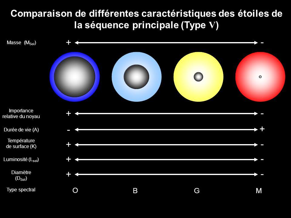 Comparaison de différentes caractéristiques des étoiles de la séquence principale (Type V ) Masse (M Sol ) + - Type spectral O BGM Importance relative