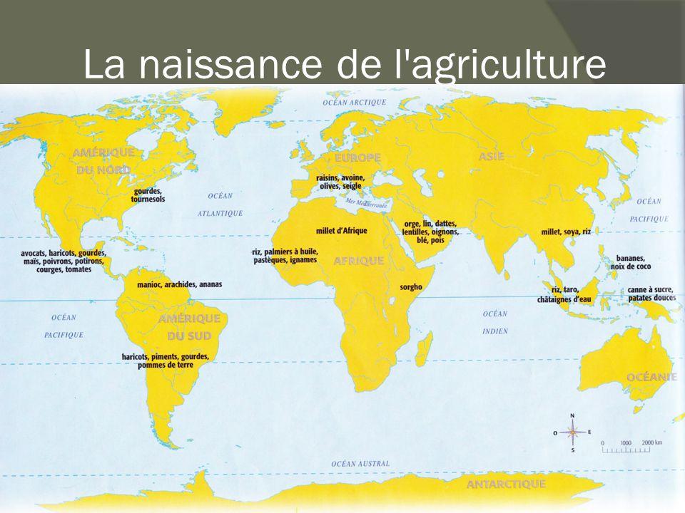La naissance de l'agriculture