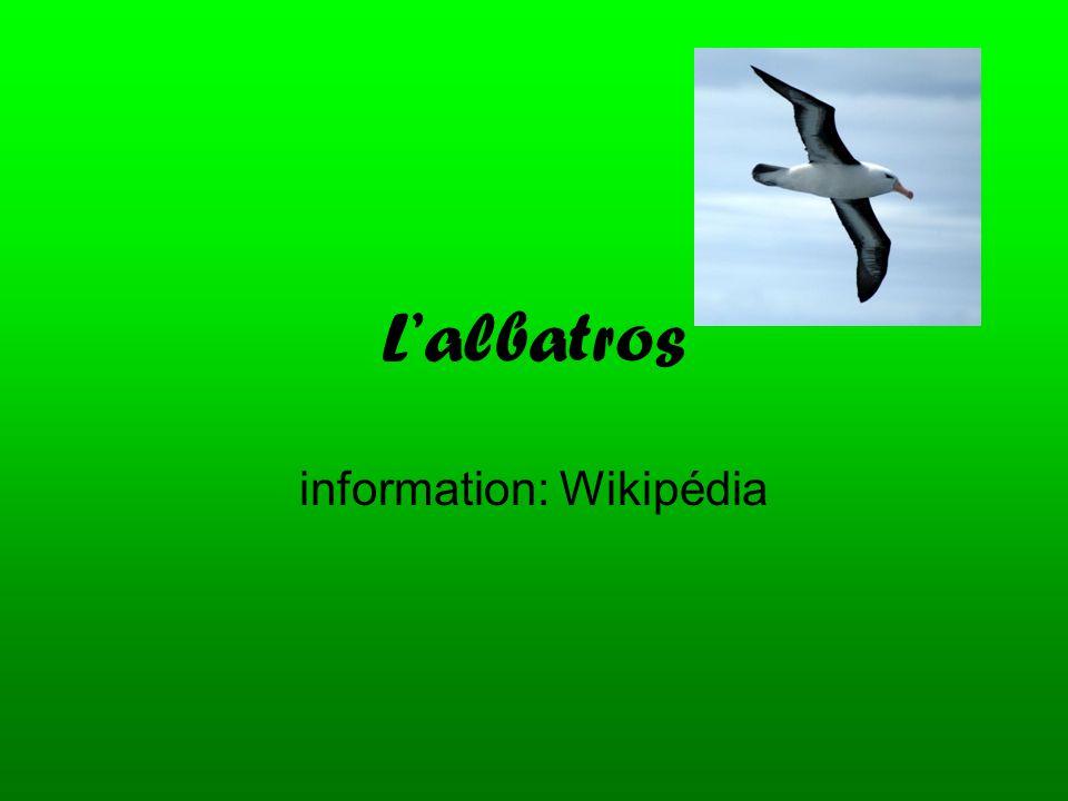 L'albatros information: Wikipédia