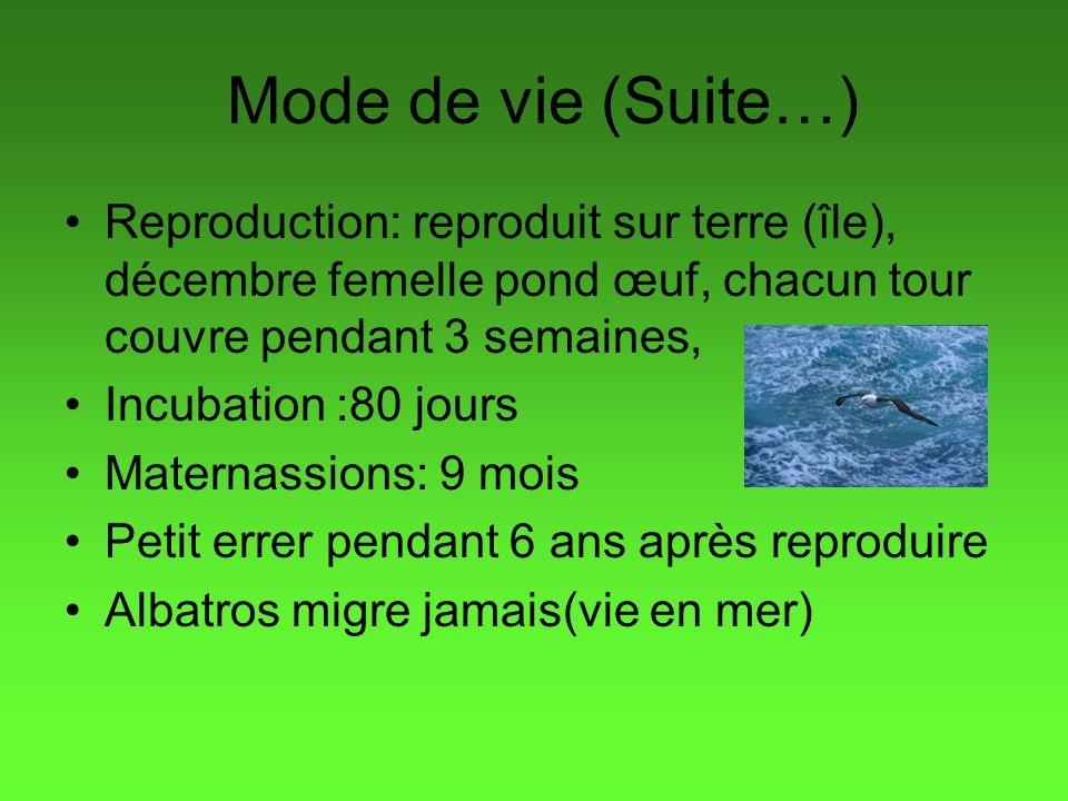 Mode de vie (Suite…) Reproduction: reproduit sur terre (île), décembre femelle pond œuf, chacun tour couvre pendant 3 semaines, Incubation :80 jours M