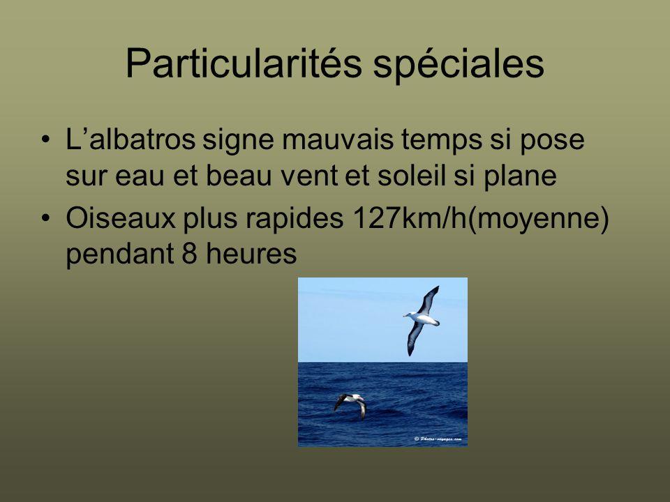 Particularités spéciales L'albatros signe mauvais temps si pose sur eau et beau vent et soleil si plane Oiseaux plus rapides 127km/h(moyenne) pendant