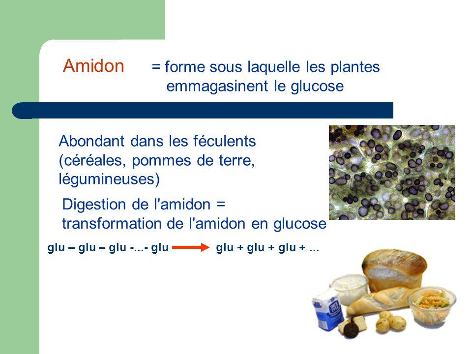 = forme sous laquelle les plantes emmagasinent le glucose Abondant dans les féculents (céréales, pommes de terre, légumineuses) Digestion de l amidon = transformation de l amidon en glucose glu – glu – glu -...- glu glu + glu + glu +...