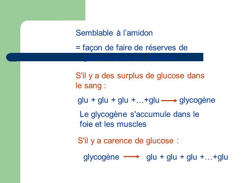 Semblable à l'amidon = façon de faire de réserves de glucose chez les animaux S il y a carence de glucose : glycogèneglu + glu + glu +…+glu S il y a des surplus de glucose dans le sang : glu + glu + glu +…+gluglycogène Le glycogène s accumule dans le foie et les muscles