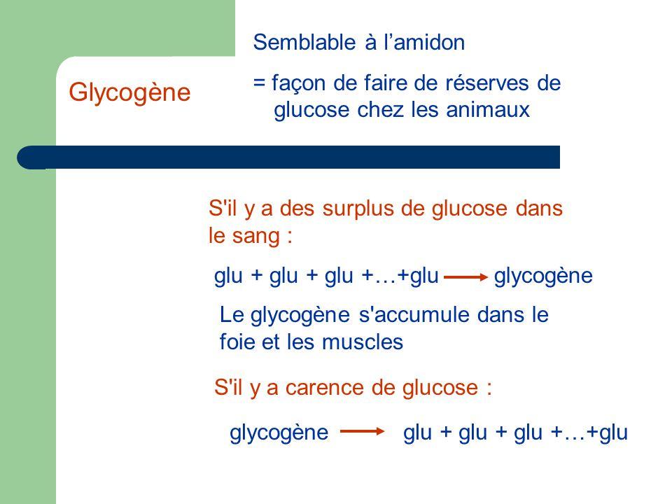 Semblable à l'amidon = façon de faire de réserves de glucose chez les animaux S il y a carence de glucose : glycogèneglu + glu + glu +…+glu S il y a des surplus de glucose dans le sang : glu + glu + glu +…+gluglycogène Le glycogène s accumule dans le foie et les muscles Glycogène
