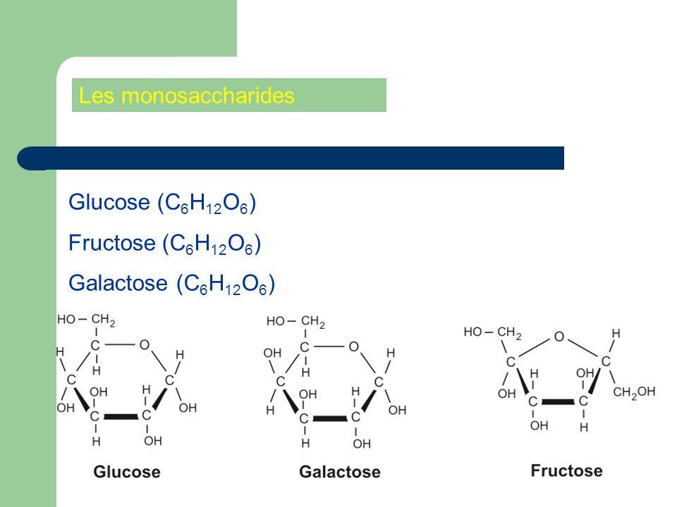 Les monosaccharides Glucose (C 6 H 12 O 6 ) Fructose (C 6 H 12 O 6 ) Galactose (C 6 H 12 O 6 )