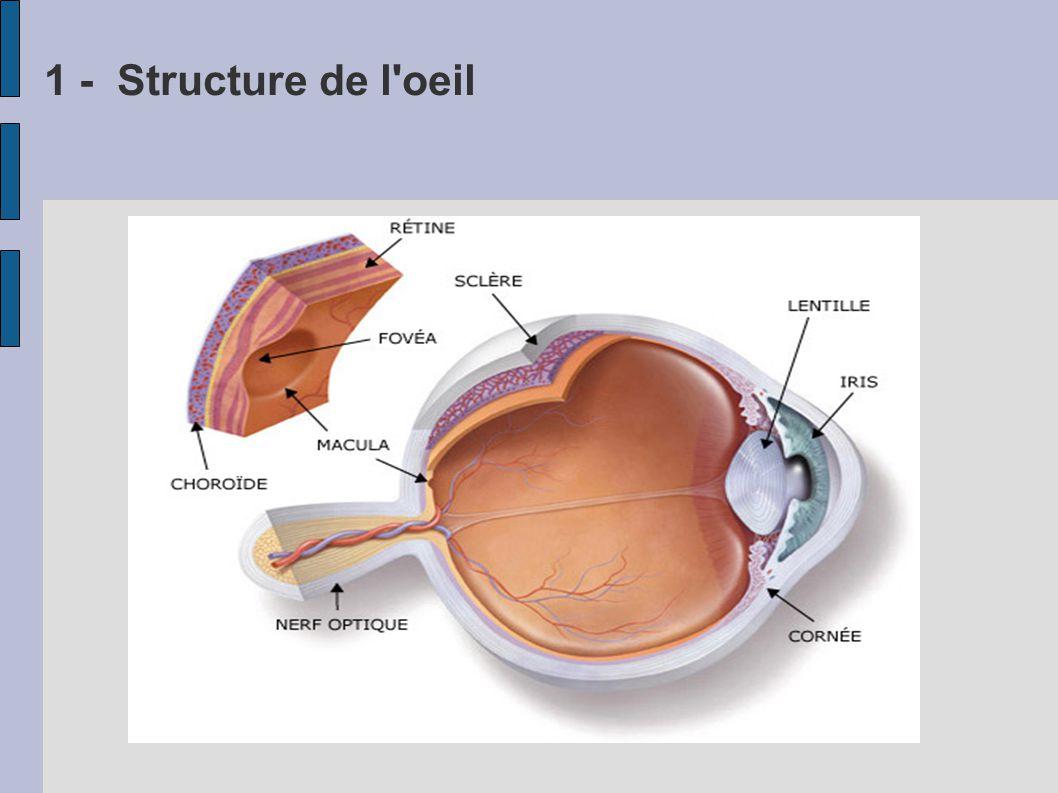 Rôle des différents éléments L Iris joue le rôle de diaphragme (D) Le cristalin joue le rôle de lentille convergente (L) La rétine joue le rôle d écran (E) et convertit le signal lumineux en signal électrique (L) (E) (D) On aperçoit un objet si : - la lumière rentre dans l oeil - l image se forme sur la rétine