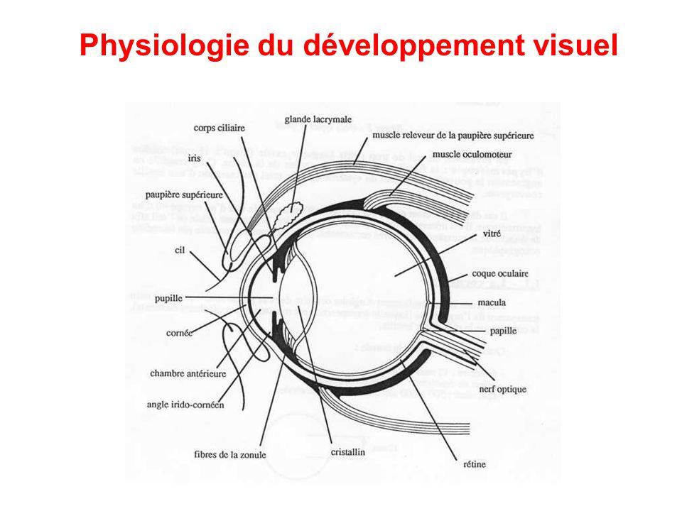 Développement visuel normal : -L'acuité visuelle augmente de 1/20 ème à la naissance jusqu'à 10/10 ème vers l'âge de 3-4 ans -Le champ visuel réduit chez le bébé et devient adulte vers l'âge de 1 an -La motricité oculaire faite de saccades devient une poursuite oculaire lente et précise -Les axes oculaires sont en légère divergence jusqu'à l'installation de la vision binoculaire vers 4 mois ½ -L'accommodation présente à l'âge de 2 mois devient adulte à 18 mois Physiologie du développement visuel