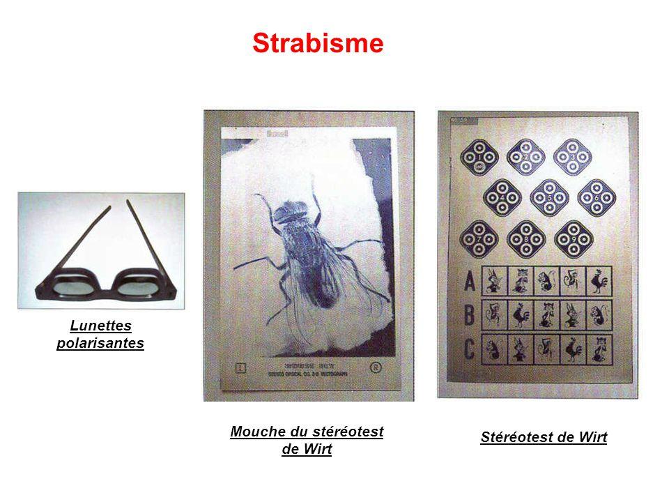 Lunettes polarisantes Mouche du stéréotest de Wirt Stéréotest de Wirt Strabisme