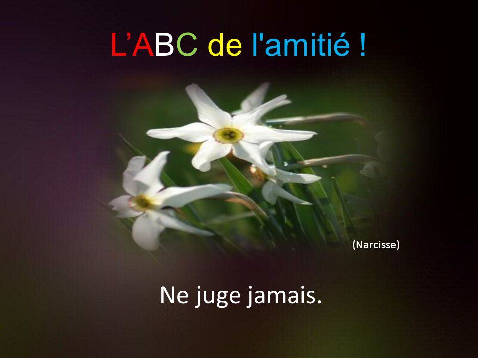 (Marguerite) Motive, stimule et encourage. L'ABC de l amitié ! !
