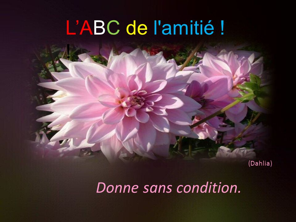 Donne sans condition. (Dahlia) L'ABC de l amitié ! !