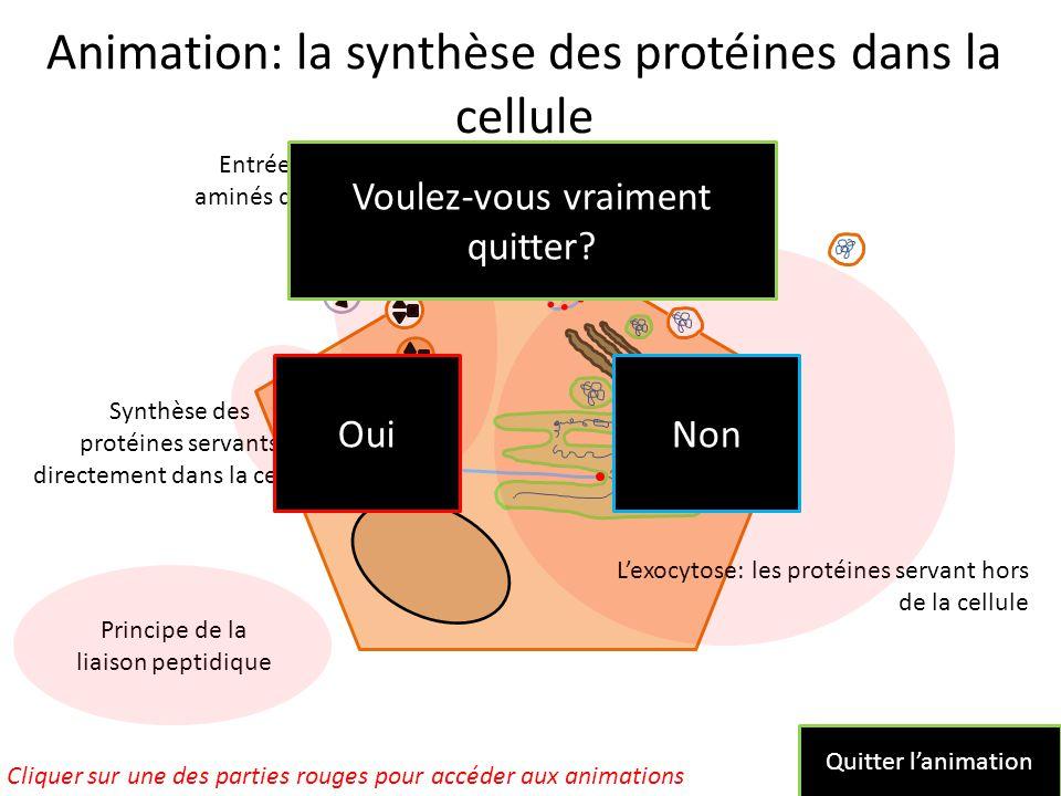 Animation: la synthèse des protéines dans la cellule L'exocytose: les protéines servant hors de la cellule Synthèse des protéines servants directement dans la cellule Entrée des acides aminés dans la cellule Cliquer sur une des parties rouges pour accéder aux animations Principe de la liaison peptidique Quitter l'animation Non Oui Voulez-vous vraiment quitter?