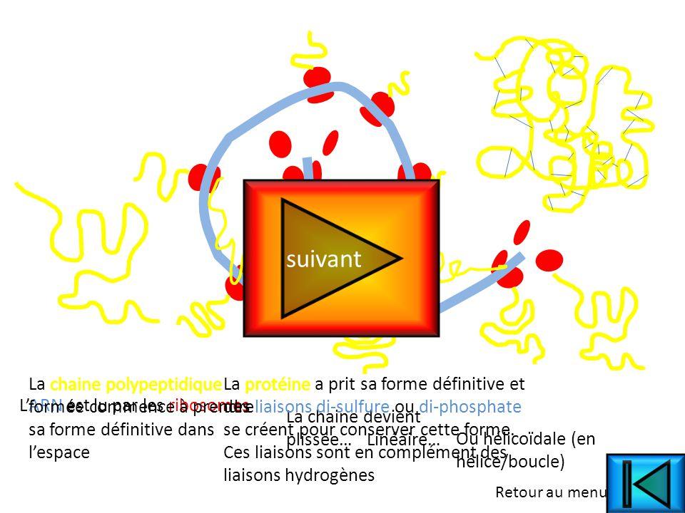 Principe de la liaison peptidique OCNC H2H2 Liaison peptidique.