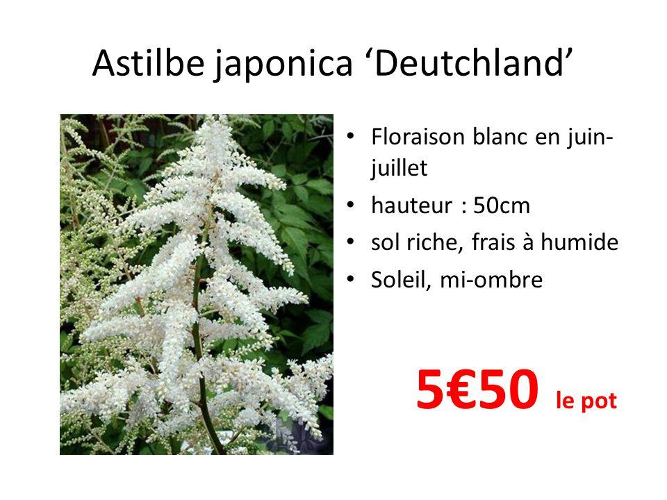 Astilbe japonica 'Deutchland' Floraison blanc en juin- juillet hauteur : 50cm sol riche, frais à humide Soleil, mi-ombre 5€50 le pot