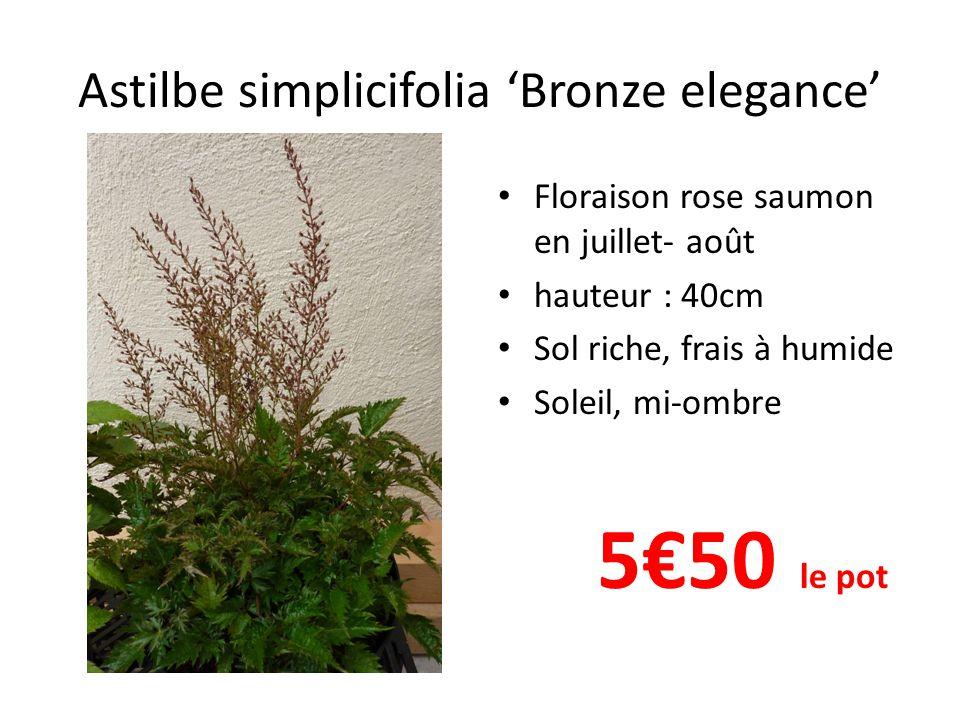 Astilbe simplicifolia 'Bronze elegance' Floraison rose saumon en juillet- août hauteur : 40cm Sol riche, frais à humide Soleil, mi-ombre 5€50 le pot