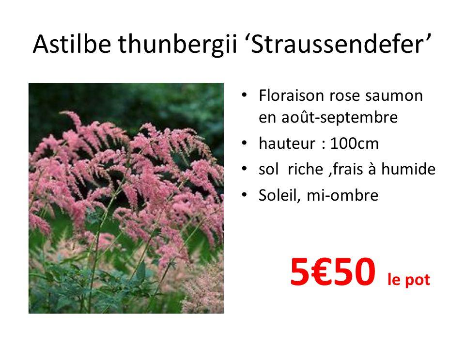 Astilbe thunbergii 'Straussendefer' Floraison rose saumon en août-septembre hauteur : 100cm sol riche,frais à humide Soleil, mi-ombre 5€50 le pot