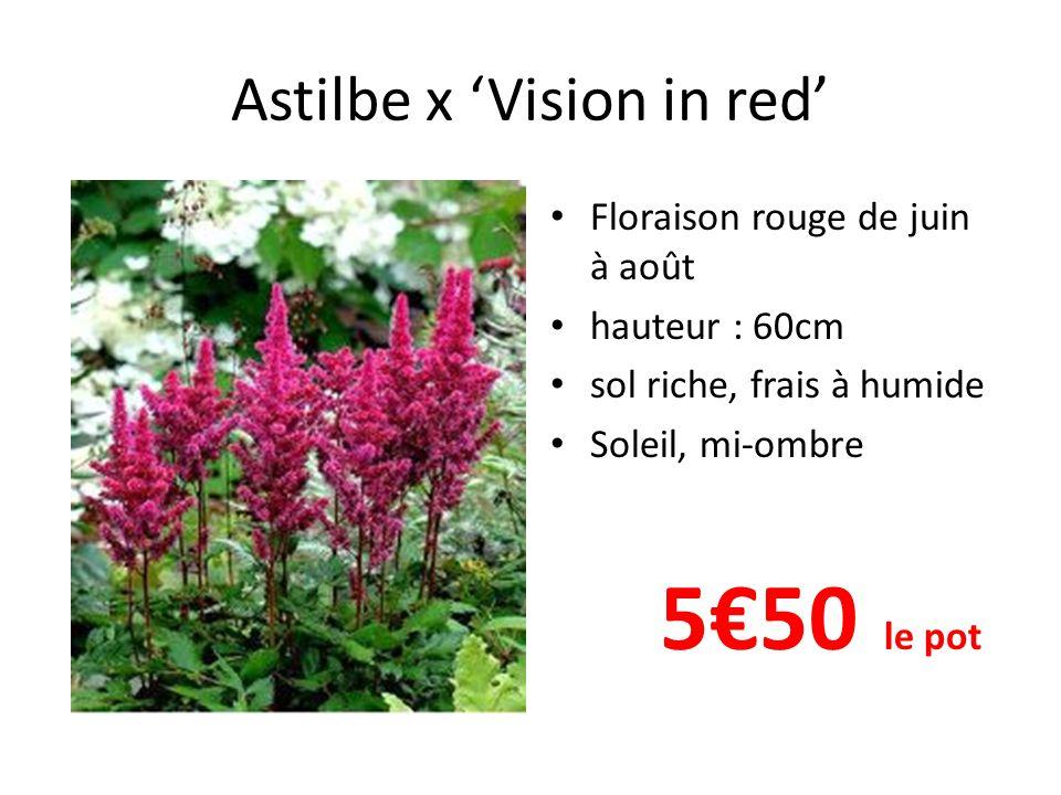Astilbe x 'Vision in red' Floraison rouge de juin à août hauteur : 60cm sol riche, frais à humide Soleil, mi-ombre 5€50 le pot