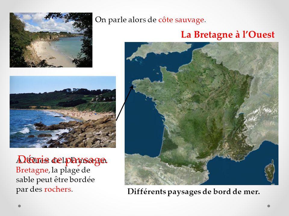 Différents paysages de bord de mer.