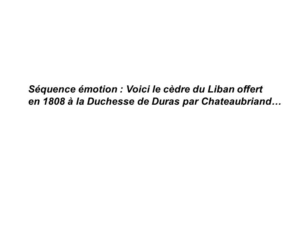 Séquence émotion : Voici le cèdre du Liban offert en 1808 à la Duchesse de Duras par Chateaubriand…