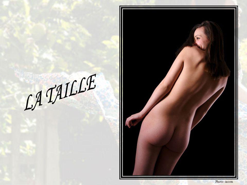 L'anthropologue DESMOND MORRIS: Les seins de la femme ont reçu, de la part des hommes, plus d'attention érotique que toute autre partie du corps. L'él