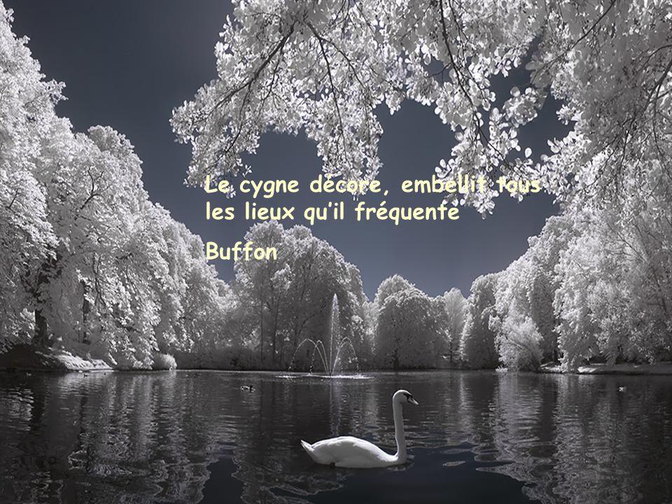 Au milieu de l'hiver, j'ai découvert en moi un invincible été. A.Camus
