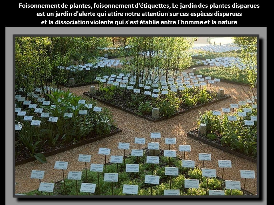Foisonnement de plantes, foisonnement d étiquettes, Le jardin des plantes disparues est un jardin d alerte qui attire notre attention sur ces espèces disparues et la dissociation violente qui s est établie entre l homme et la nature