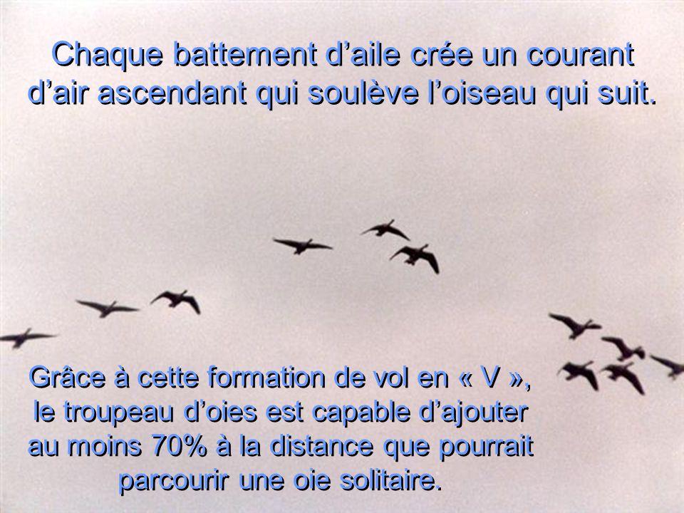 Chaque battement d'aile crée un courant d'air ascendant qui soulève l'oiseau qui suit.