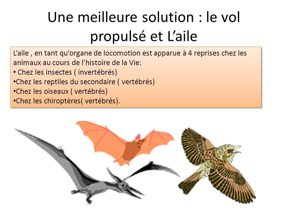 Une meilleure solution : le vol propulsé et L'aile L'aile, en tant qu'organe de locomotion est apparue à 4 reprises chez les animaux au cours de l'histoire de la Vie: Chez les insectes ( invertébrés) Chez les reptiles du secondaire ( vertébrés) Chez les oiseaux ( vertébrés) Chez les chiroptères( vertébrés).