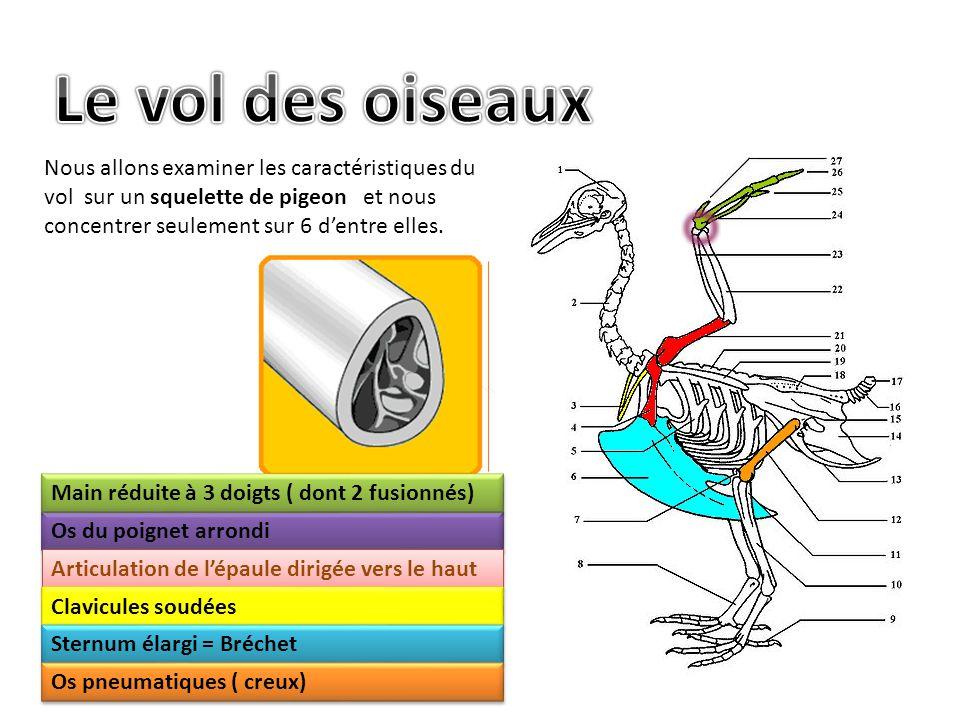 Nous allons examiner les caractéristiques du vol sur un squelette de pigeon et nous concentrer seulement sur 6 d'entre elles.