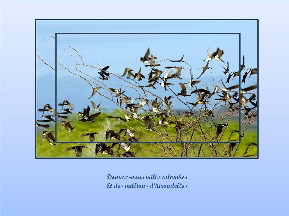 Donnez-nous mille colombes A tous les soleils levants