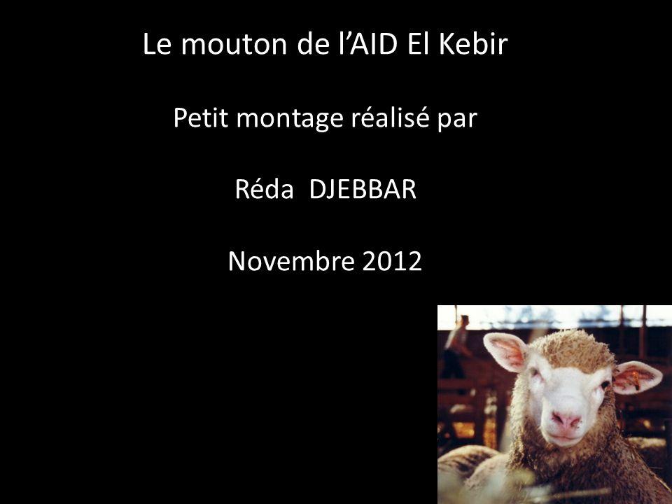 Le mouton de l'AID El Kebir Petit montage réalisé par Réda DJEBBAR Novembre 2012