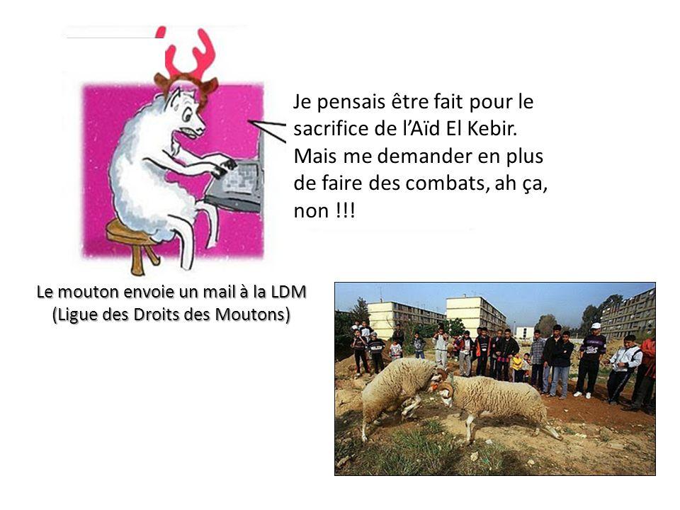 Le mouton envoie un mail à la LDM (Ligue des Droits des Moutons) Je pensais être fait pour le sacrifice de l'Aïd El Kebir. Mais me demander en plus de